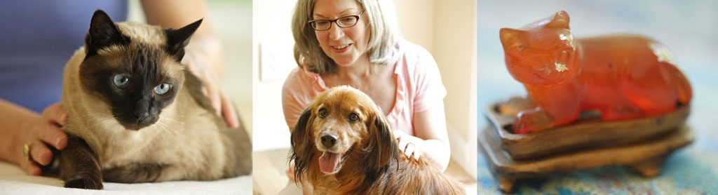Pet energy therapy with Ricarda O'Conner